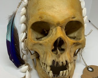 Borneo Headhunter Trophy Skull replica with cowries and feather