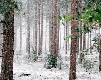 Winter Forest Photography Snow Landscape Pictures Nature Digital Images Printable Wall Art