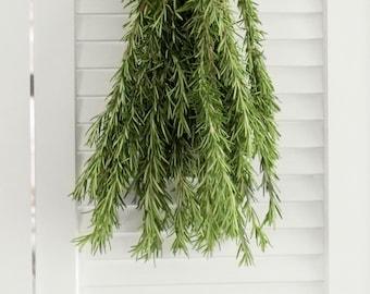 Fresh Cut Rosemary Herbs 8-10 stems