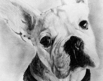 Custom Pet Portraits hand drawn in pencil