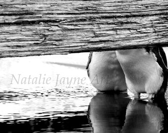 Love Birds Black and White