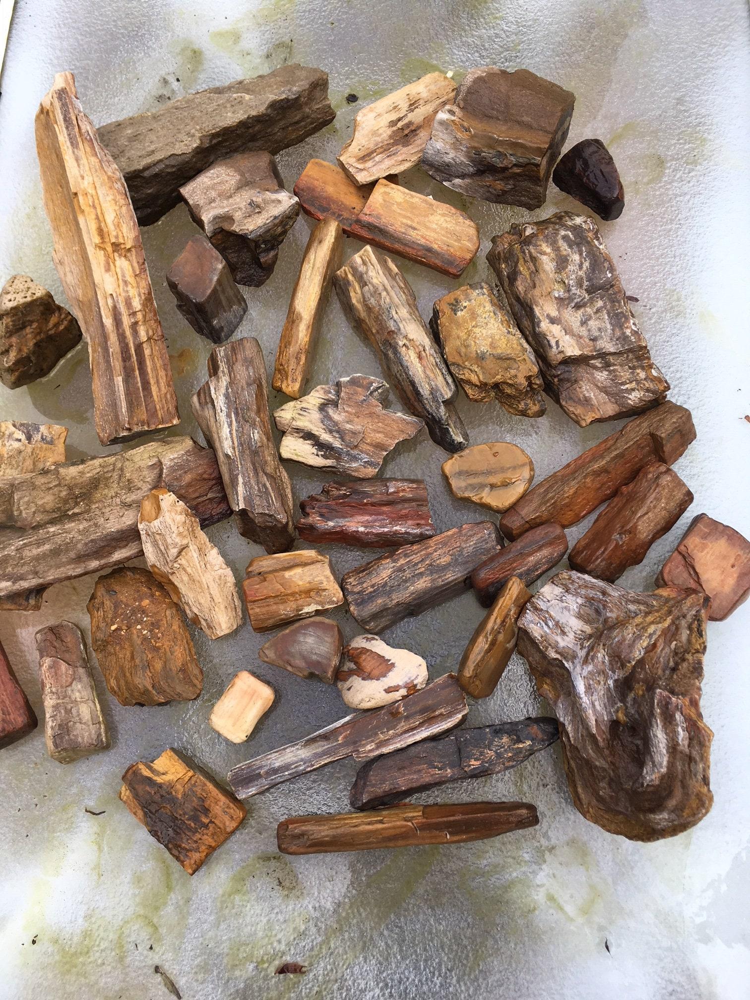2 Petrified Wood Pieces---Natural Raw Petrified Wood---Crafts /& Jewelry Making---Rock Collecting---Petrified Wood---Rocks