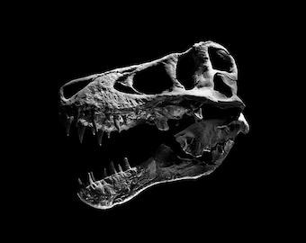 "PHOTO PRINT 8""x8"" | black-and-white T-Rex dinosaur skull portrait, unframed"