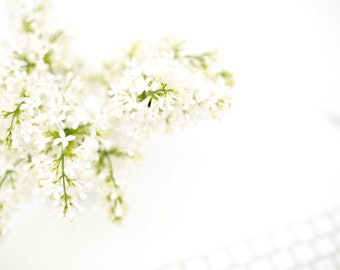 White flowers - styled stock photo
