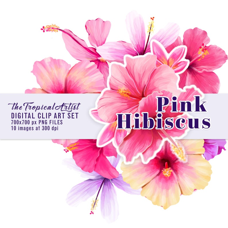 Pink Hibiscus Clip Art Flowers Clipart Tropical Floral Etsy