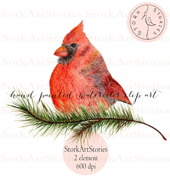 Christmas Cardinals Clipart.Watercolor Red Cardinal Clipart Greeting High Quality Clipart Christmas Cardinal Clip Art Transparent Png Red Watercolor 600dpi