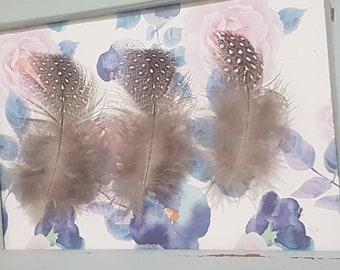 9cm Bulk Lot 40 x Natural Guinea Feathers Speckled 9cm