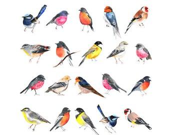 Watercolour Bird Print, Tasmanian Birds, Art Decor, Large Wall Art, Fairy Wrens, Australian Birds, Giclee Print, Animal Print
