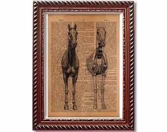 Skeleton print Horse Anatomy poster Animal medical decoration