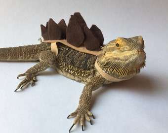 Stegosaurus Bearded Dragon/Lizard Costume : costumes for bearded dragons  - Germanpascual.Com