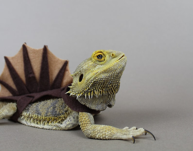Spinosaurus Bearded Dragon/Lizard Costume