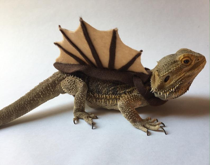 Spinosaurus Bearded Dragon/Lizard Costume