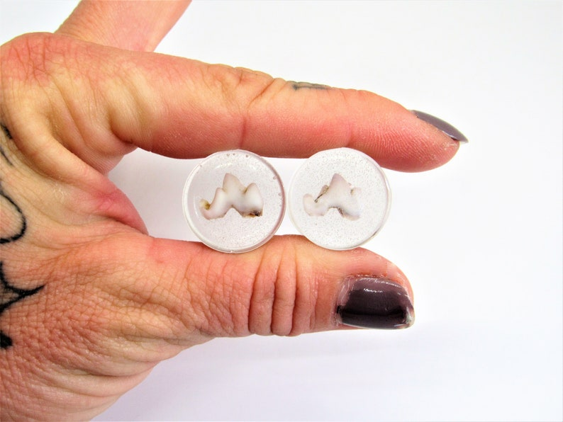 Bone Body Jewelry Tooth In Resin Gauge Plugs Earrings Size 18mm-1116 Clear Resin Real Tooth Plug Earrings Bone Resin Plugs Goth Plugs
