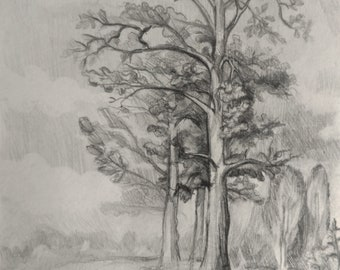 Trees Drawing Pencil on Paper