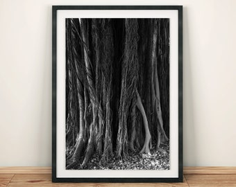 4d3969ff Banyan Tree Black and White Original Photography Art Print Poster