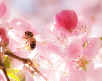 Soft Flowers with Bee