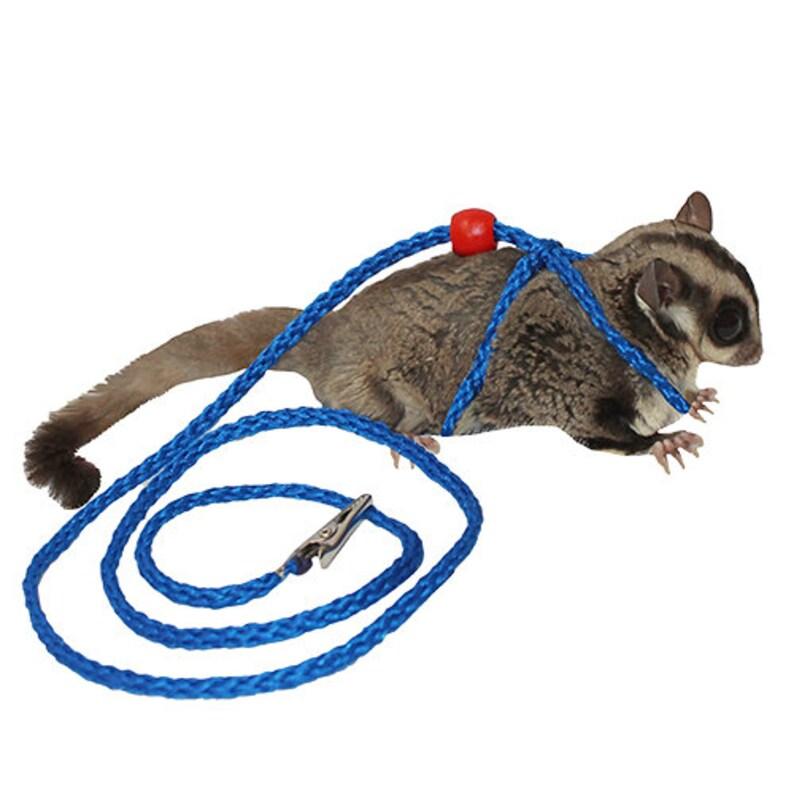 Glider Harness & Leash - Safe and Durable - Sugar Glider, Rat, Chinchilla,  Hedgehog, Ferret, Parrot, Guinea Pig, Rabbit, Hamster