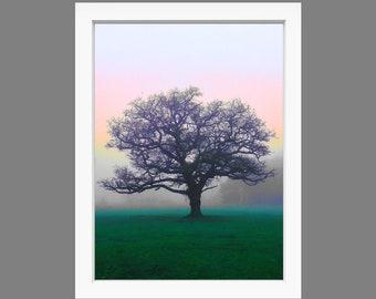 Print: Tree on Wimbledon Common fine art print