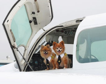 Pomeranian Pilot