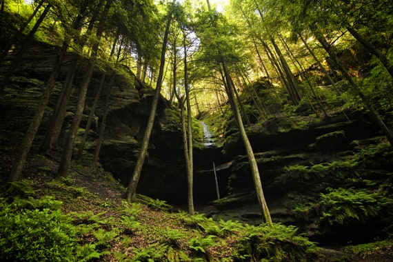 Forest Trickle Fine Art Photography Nature Photography Landscape Photography Landscapes Tree Waterfalls Forest