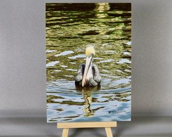 Brown Pelican (5x7)
