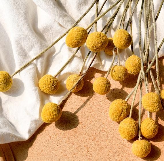 Dried Flowers Branch Farmhouse Yellow Billy Balls Home Decor Bouquet Golden Ball