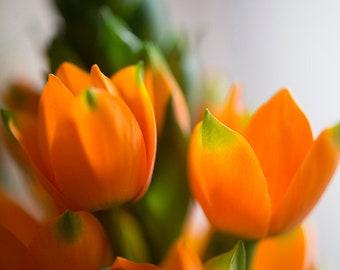 Orange Star 3