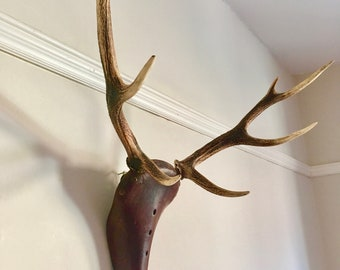 Upcycled Stag Head Brooks Bike Seat Wall Mounted