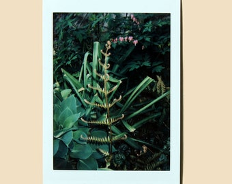 Fern and Bleeding Heart - Instant Film Photo