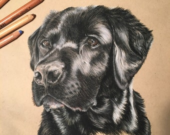 Custom Pet Portrait drawing done in pastels - Dogs, cats, birds, reptiles and more