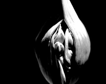 Seed pod in Black and white