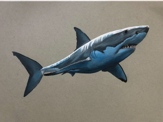 Great White Shark Colored Pencil Drawing Print Etsy