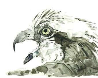 Western Osprey - Osprey - original watercolor 2016