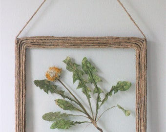 Real Dandelion Botanical Shadowbox Wall Art