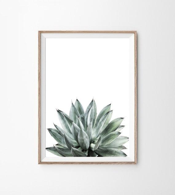 Succulent provisional article