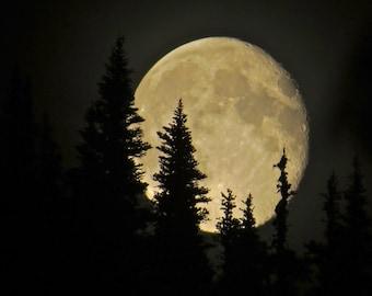 Full Moon Rising amongst the Trees