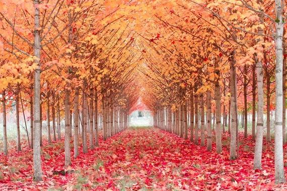 Fall Trees Etsy