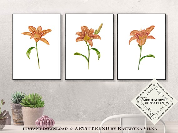 photo about Etsy Printable Wall Art named Farmhouse wall decor established of 3 prints, Lily flower printable wall artwork preset for floral house decor, Downloadable art