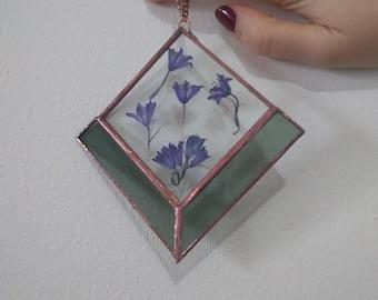 Herbarium glass