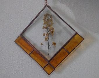 herbier vitrail