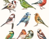 20 x Paper Party Napkins Collection of birds by Ambiente party BBQ or social gathering