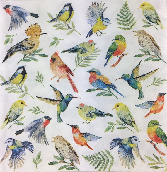20 Paper Party Napkins Robins Family Pack Of 20 3 Ply Luxury Serviettes Birds