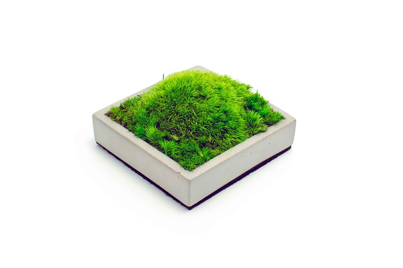 Preserved Moss Decor Concrete Tray Norwegian Pole Bunn Set of 5