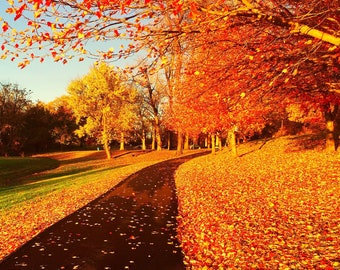 Pathway to Fall