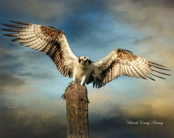 Osprey on Post