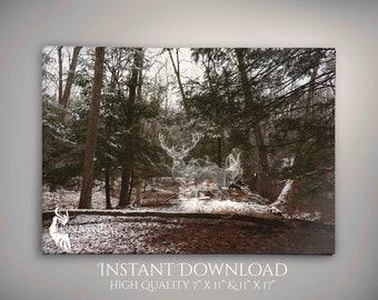 Spirit Animal: Deer, Woodland, Fantasy, Photography INSTANT DOWNLOAD
