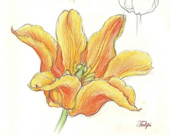 Narcissus, Gladioli, Easter Lily, Ornithogalum & Tulips to Print Out