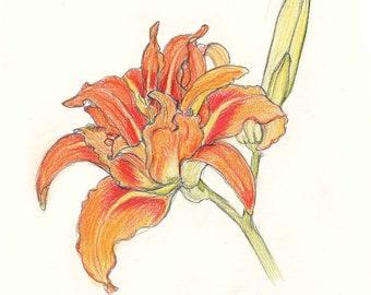 Alstroemeria, Canna Lily, Easter Lily, Hemerocallis Daylily & Zantedeschia to Print Out