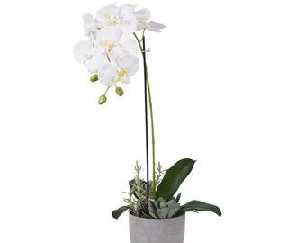Urban Orchid & Succulent Arrangement