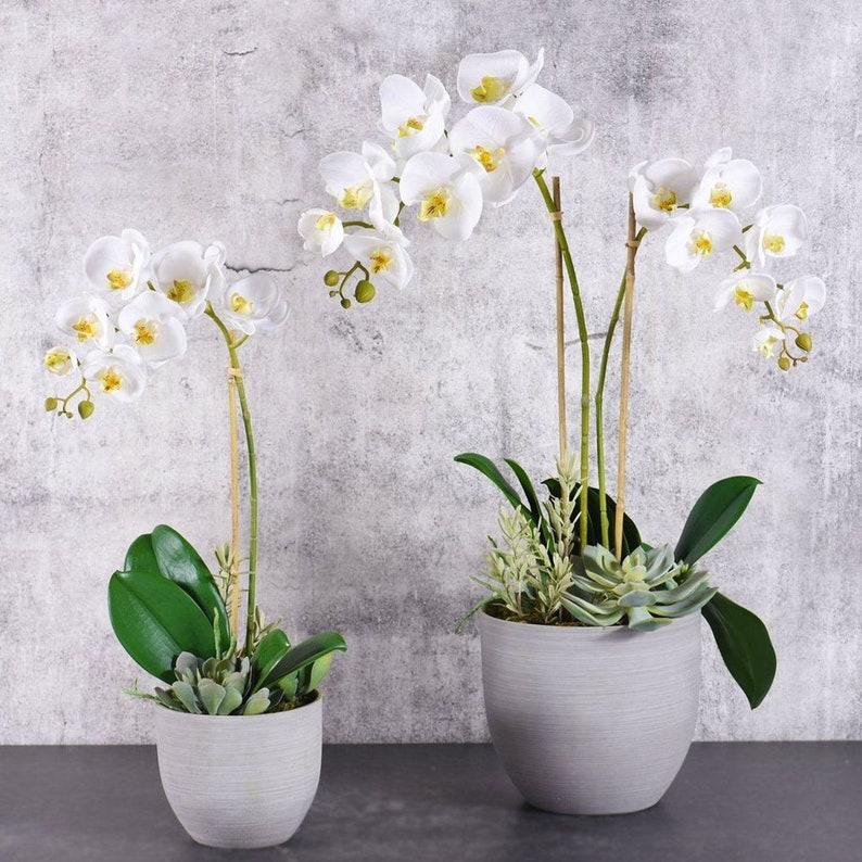 Hamptons Orchid & Succulent Arrangement | Silk Orchid Arrangement | Faux  Orchid Arrangement | Luxury Silk Orchids